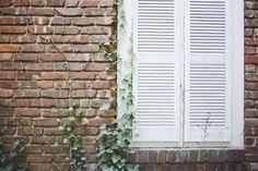 Natural (non chemical) way to kill English Ivy