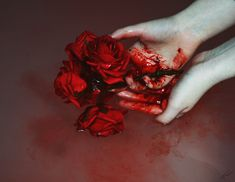 The white roses painted red with blood