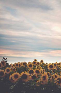 Entre una flor que cojo y otra que regalo