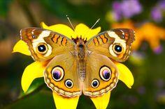 Бабочки - живые цветы!