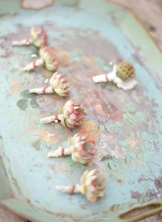 succulent bouts by kelly oshiro photo: delesie