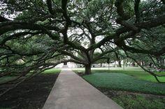 tree Imgur