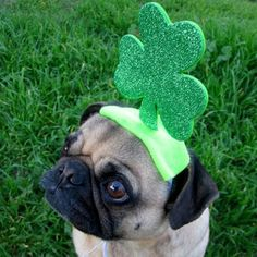 Fancy - IRISH LUCKY dog or cat hat fits all sizes by ilickyou on Etsy