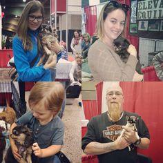 ❤️De belles rencontres lors des SNAC❤️ La preuve que tous peuvent aimer les chihuahuas et qu'ils les aimeront à retour❤️  www.machupitouchihuahua.com