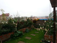 green roof terrace