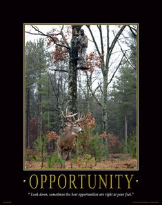 OPPORTUNITY - BOW HUNTING POSTER - Apple Creek Outlet