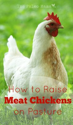 How to Raise Meat Chickens on Pasture - The Paleo Mama Raising Meat Chickens, Keeping Chickens, Turkey Farm, Hobby Farms, Chickens Backyard, Backyard Farming, Farm Life, Farm Animals, Just In Case