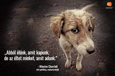 Churchill, Dogs, Animals, Animales, Animaux, Doggies, Animal, Pet Dogs, Animais