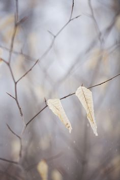 Remaining Leaves in Evansburg State Park by Vito Paratore on 500px