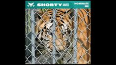 Tony's Shorty Awards Campaign Video - Watch my video and please nominate me! https://freetonythetiger.wordpress.com/2015/01/21/nominate-tony-for-a-shorty-award-tonytiger2000-shortyawards/
