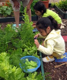 Edible gardens for kids 101: Gardening helps empower young people to make positive and creative nutritional choices for themselves and to become teachers beyond the garden.