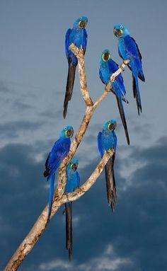 Wonderful #parrot   #photography   #photooftheday