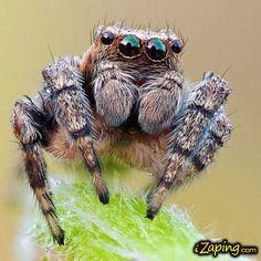 Insectos terroríficos en macro fotografías