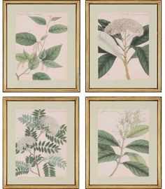Charlton Home 'Damask Blooms V' by Wallich - 4 Piece Picture Frame Graphic Art Print Set on Paper Metal Wall Art, Framed Wall Art, Framed Prints, Painting Frames, Painting Prints, Paintings, Graphic Art Prints, Tree Graphic, Acrylic Paint Set