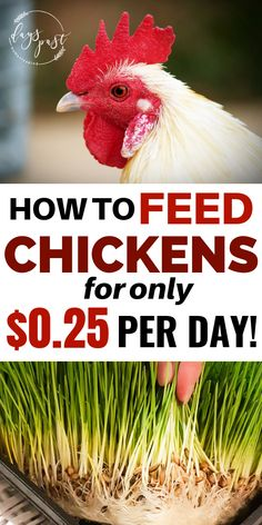 12 Best Organic chicken feed images in 2019 | Chickens