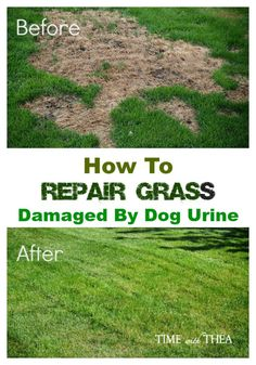 How To Repair Grass Damaged By Dog Urine ~ Time With Thea