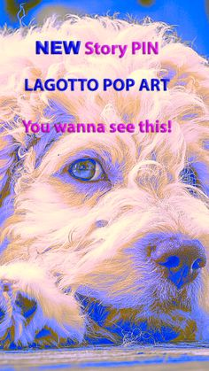 Just a little story pin about our first trial with Lagotto pop art. We continue to announce story pins by separate pins for as long as this new tool can't be shared and scheduled with all content, just like other pins. So please bear with us and ENJOY viewing our stories. Yours Wuffclick-pic