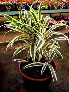 As melhores flores e plantas para esquecidos de plantão terem em casa.
