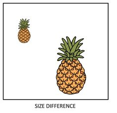 In this 2D image it is showing the element SPACE. This artwork shows the distance between the small and large pineapple, it is also showing the positive and negative space.
