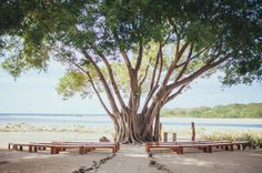 Costa Rica simple, rustic wedding ceremony facing the ocean. Teak benches and and driftwood poles made the aisle design of a dream beach wedding in Tamarindo.