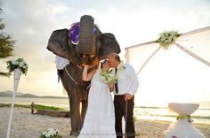 Phuket Elephant Wedding Phuket Wedding, Thailand Wedding, Destination Wedding, Event Organiser, Elephant Wedding, Wedding Ceremony, Marriage, Beach, Valentines Day Weddings