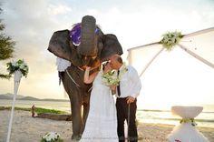 Phuket Elephant Wedding Phuket Wedding, Thailand Wedding, Destination Wedding, Event Organiser, Elephant Wedding, Wedding Ceremony, Marriage, Beach, Style