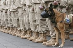A Day and a Life of Dogs: Military Heroes, Military Dogs