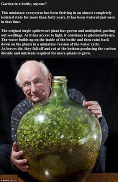 Self sustaining ecosystem - Just WAY too cool.. And incredibly nerdy for me to say so.. Wow!! This is truly amazing! Nature never ceased to drop my jaw to the floor.