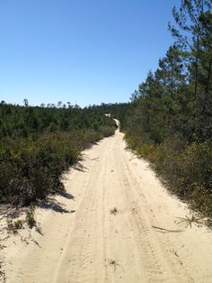 atv riding at Ocala Nation forest, Centennial trail, Florida