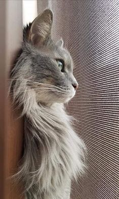 MonChatDore is coming soon - Beautiful Cats⎪Les plus beaux chats Pretty Cats, Beautiful Cats, Animals Beautiful, Cute Animals, Beautiful Creatures, Beautiful Places, Cute Cats And Kittens, Cool Cats, Kittens Cutest