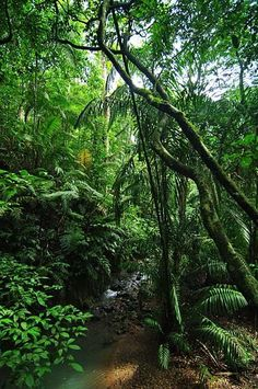 my life feels like. a jungle Tropical Forest, Tropical Garden, Tropical Plants, Beautiful World, Beautiful Places, Images Murales, Amazon Rainforest, Mother Nature, Nature Photography