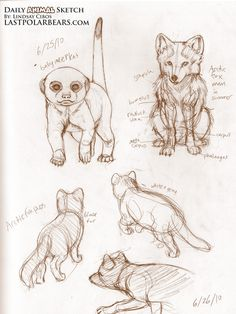 Daily_Animal_Sketch_054