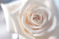 Gave my wife a rose like this once ~ not good.  Means friendship, not love!