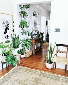 house plants 438326976231481759 - The Downside Risk of Easy Houseplants for Indoor House Ideas If you opt to sell your house, a door which requires regular maintenance in addition to b… Source by campusbash Decor, Interior, House Plants Indoor, Interior Plants, Home Decor, Gorgeous Rug, Plant Decor, House Plants Decor, Room With Plants