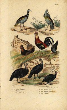 Original Antique Natural History Hand colored by RarePostCards