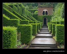 Biddulph Grange Yew Hedges