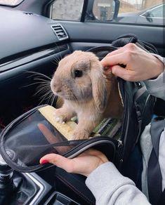 Cute animal memes, cute funny animals, cute baby animals, animals and pets, Pet Bunny Rabbits, Pet Rabbit, Bunny Bunny, Lop Bunnies, Baby Animals Pictures, Cute Animal Photos, Cute Baby Bunnies, Funny Bunnies, Cute Little Animals