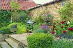 Wide steps lead from french doors, flanked by box cubes  with a feature stone jardinere.  Lime green Alchemilla mollis foams below Allium 'Globemaster and foxgloves whilst the striking a headily scented Rosa 'Darcey Bussell' adding a rich contrast.