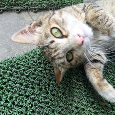 「吾輩は猫である」の画像 廃車買取・自動車リサイクル 株式会社小…  Ameba (アメーバ)
