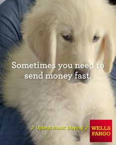 Need to settle up? Send money with Zelle - right from the Wells Fargo app! Pet Dogs, Dogs And Puppies, Online Pet Supplies, Puppy Care, Cool Pets, Dog Accessories, Dog Owners, Beautiful Creatures, Animal Photography