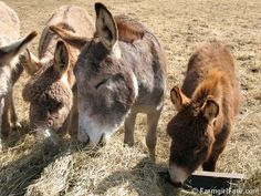 Happy donkeys!  :)  How I love Farmgirl Fare... (www.farmgirlfare.com)