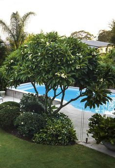 Subtropical plants transform this contemporary garden - This already-established garden with old-world charm is reworked with subtropical plants to become - Backyard Pool Landscaping, Tropical Landscaping, Garden Pool, Landscaping With Rocks, Garden Plants, Pool Plants, Backyard Plants, Green Garden, Landscaping Plants
