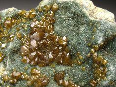 Andradite Garnet var. Topazolite crystals on green Chloritic schist matrix with Clinochlore / Yellow Cat Mine, San Benito Co., California