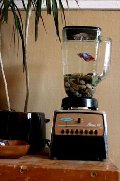 Upcycled Kitchen Blender Made Into A Fish Tank Aquarium Aquarium Original, Aquariums, Aquarium Fish Tank, Fish Tanks, Ideas Hogar, Ideias Diy, Reuse Recycle, Deco Design, Home And Deco