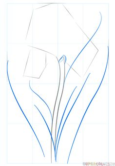 How to draw an iris flower step by step. Drawing tutorials for kids and beginners.