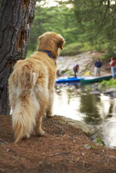 Pet Friendly RV Parks, including size designation. Important if (like us) your dogs are the size of small horses! ;)
