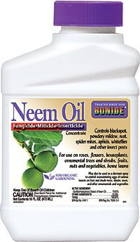 Neem Oil Concentrate to control  Japanese Beetles on my rose bushes