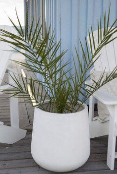 Palmer er utrolig stilig i Lyngør pottene i fiberclay. Sunken Trampoline, Built In Bbq, Decorative Screens, Ceramic Pots, Herb Garden, Garden Inspiration, Houseplants, Outdoor Gardens, Decor Styles