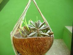 Planter from recycled coconut shell