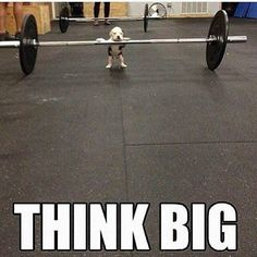 You can do anything you put your mind to!  #training #cute #puppy #funny #gym #bulldog #funnyquotes #englishbulldog #weights #weightlifting #dogswholift #popeyesstrong